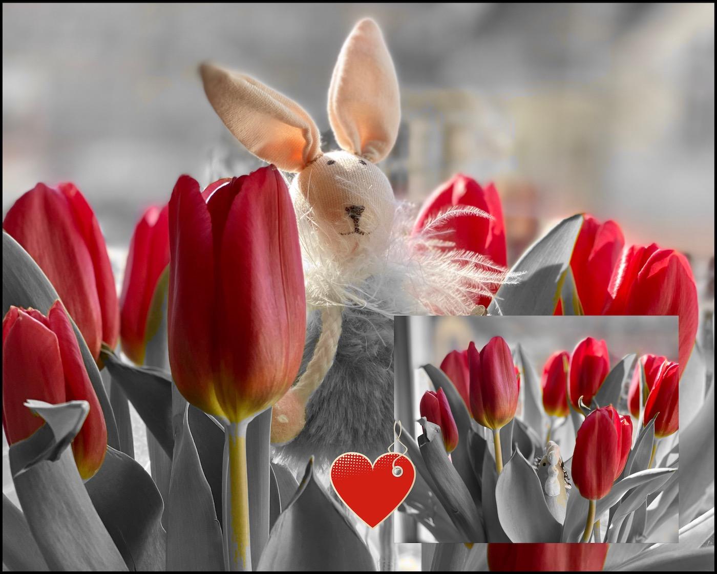 Wir lieben Tulpen